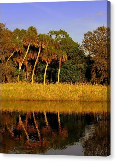 Four Palms Reflecting In Myakka Lake Canvas Print