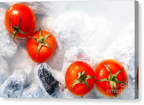 Four Red Tomatos  Canvas Print by Agusta Gudrun Olafsdottir