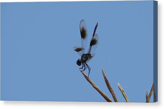 Four Spotted Pennant Canvas Print by Bruce W Krucke