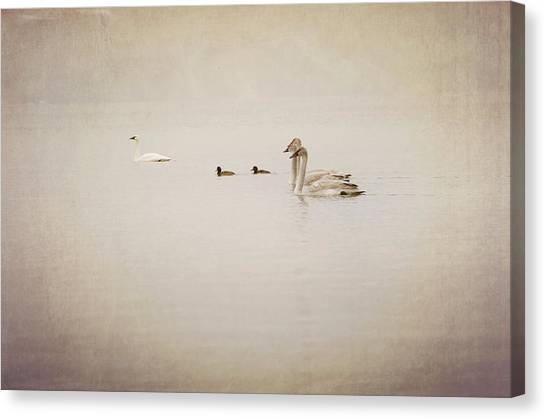 Penticton Canvas Print - Four Swan Swimming by Blue Mountain Images