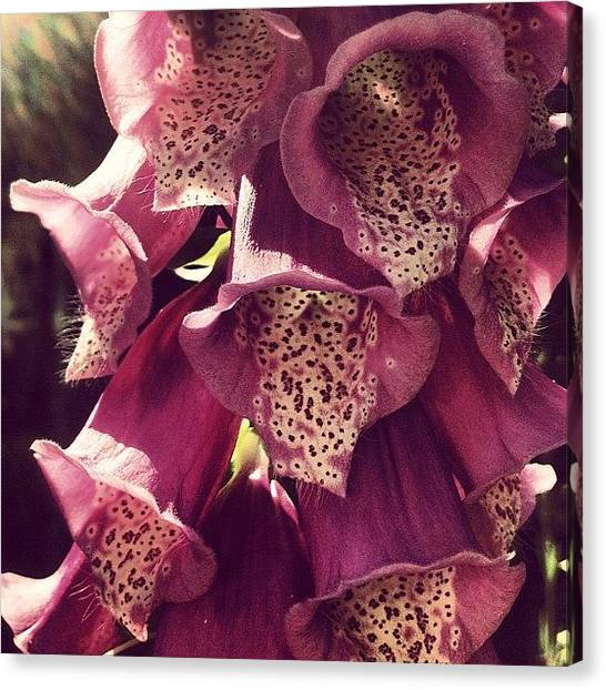 Social Canvas Print - Foxgloves by Nic Squirrell