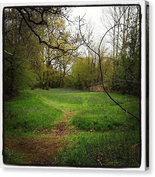 Forest Paths Canvas Print - Foxley Wood by Oliver Smith