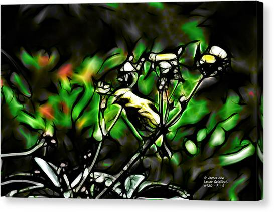 Fractal S - Take A Look - Lesser Goldfinch Canvas Print