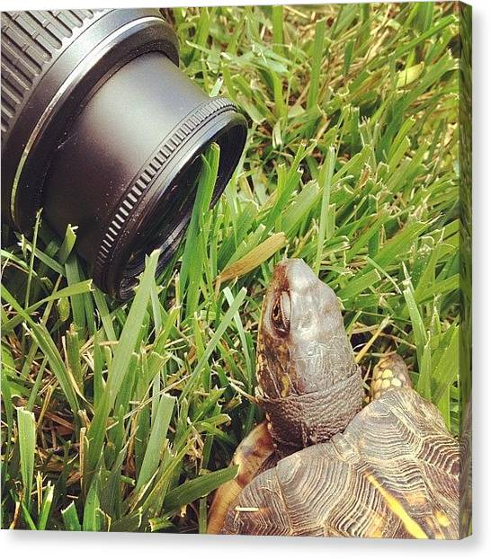 Turtles Canvas Print - Frank Liked To Get His Picture Taken by Kat Pl