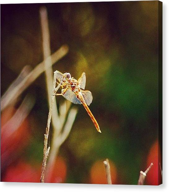 Insects Canvas Print - Freedom - Beautiful Freedom by Joel Lopez