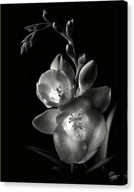 Freesia In Black And White Canvas Print