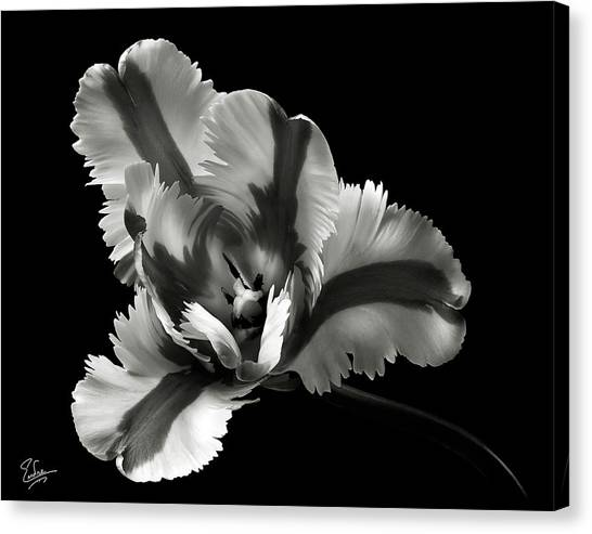French Tulip In Black And White Canvas Print