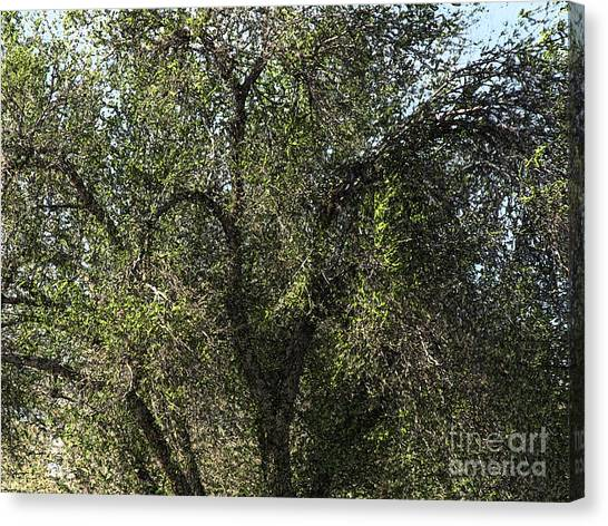 Fresco Tree Canvas Print