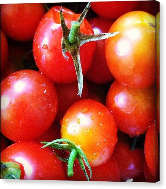 Tomato Canvas Print - Fresh From Our Garden.... Oh Happy by Vicki Damato