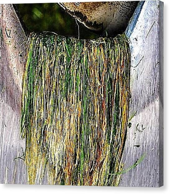 Machinery Canvas Print - Fresh Grass Hanging From The Blades Of by Sascha  Buchholz