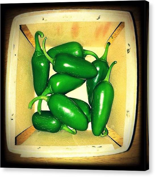 Pepper Canvas Print - Fresh Jalapeños Picked From My Garden! by Jenni Pixl