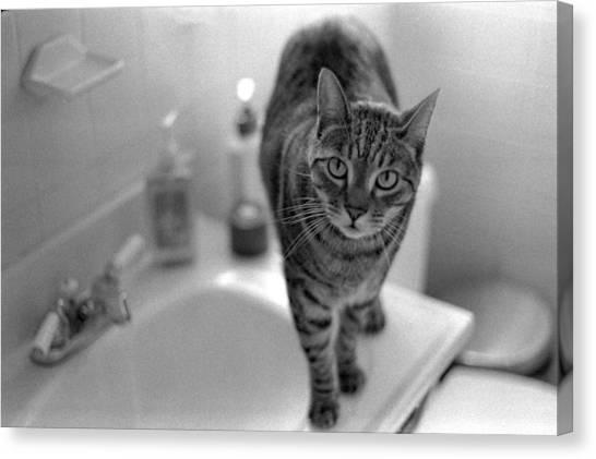 Fritz The Cat Brooklyn Ny 2003 Canvas Print