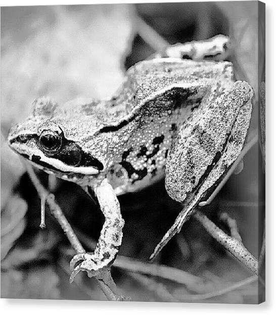 Frogs Canvas Print - Frog. #dtmas #suchkov by Andrey Suchkov