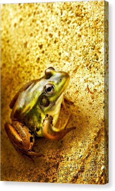 Frog Canvas Print by HD Connelly