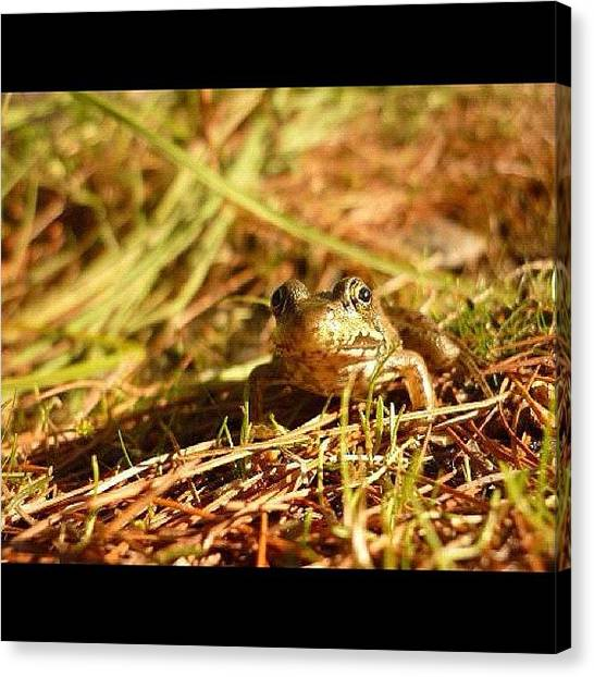 Songbirds Canvas Print - Frog In The Grass  Took With My Camera by Cody Cardinal