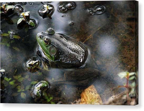 Frog In The Millpond Canvas Print