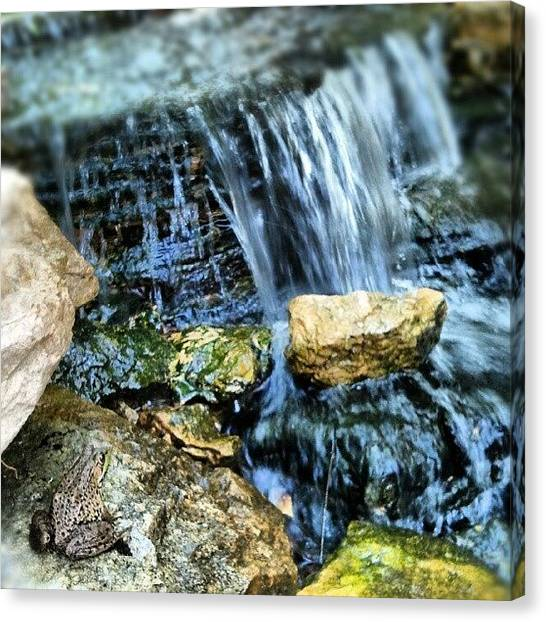 Frogs Canvas Print - Froggie Watching Waterfall At My by Crystal LaTessa