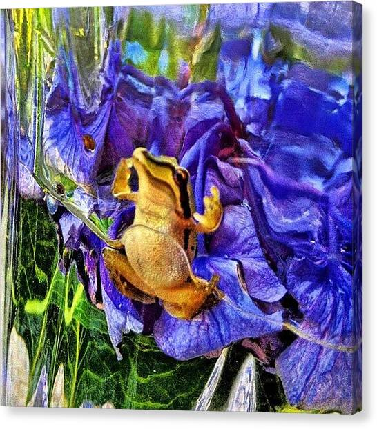 Frogs Canvas Print - Froggy's Duck by Rita Frederick