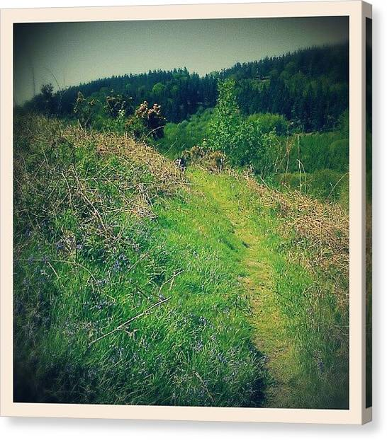 Forest Paths Canvas Print - From Our Recent Trip To #breidden by Alexandra Cook