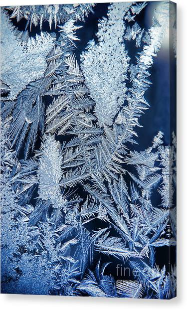 Ice Crystals Canvas Print - Frost by HD Connelly