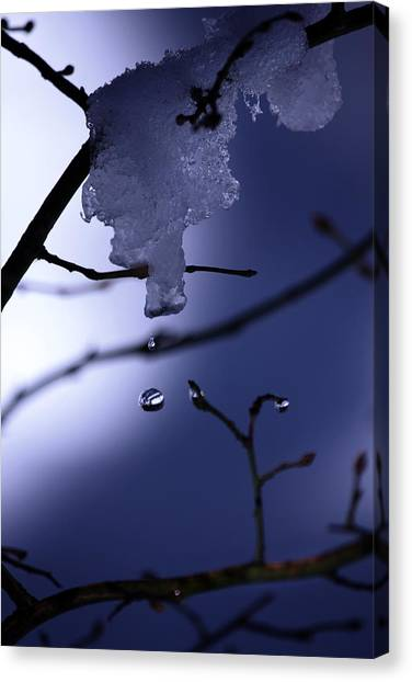 Frozen But Still Wet Canvas Print by Christine Gauthier