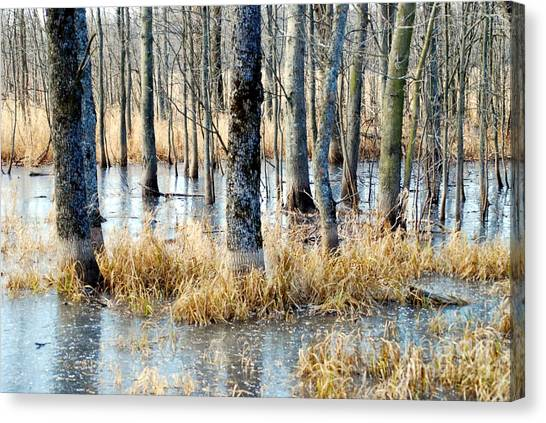 Frozen Forest Canvas Print by Crissy Sherman