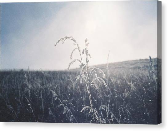 Frozen In Time Canvas Print by Trent Mallett