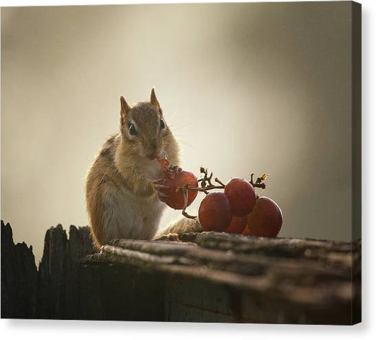 Squirrels Canvas Print - Fruit Of The Vine by Susan Capuano