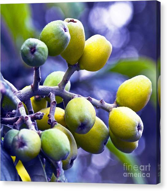 Sicilian Fruits Canvas Print
