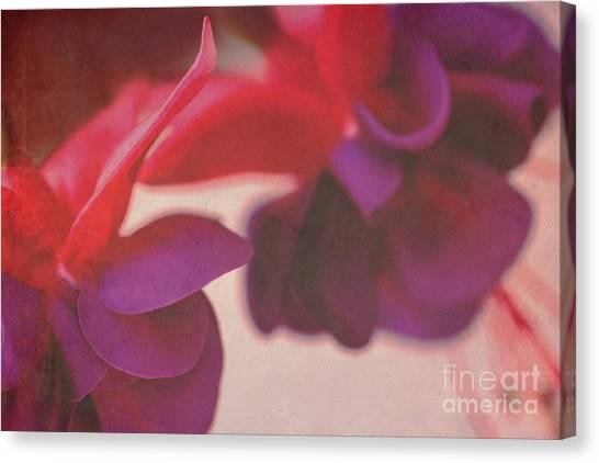 Fuchsia Canvas Print by Angela Bruno