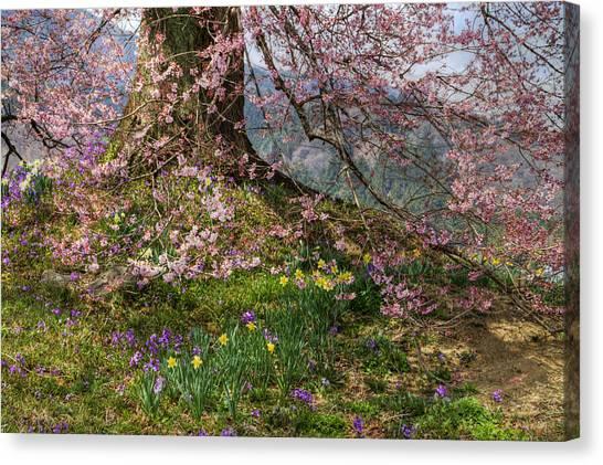 Full Bloom Canvas Print
