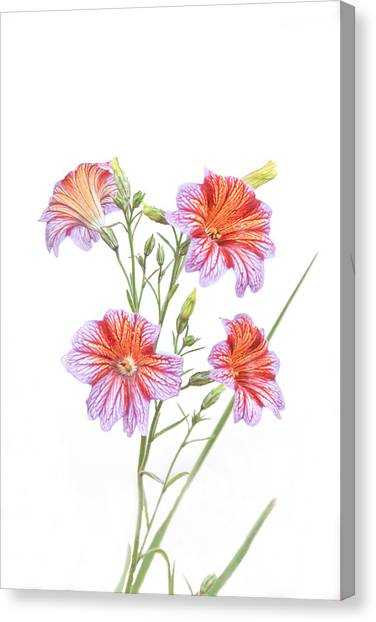 Full Bloom Canvas Print