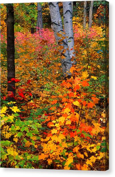 Full Fall Palette Canvas Print