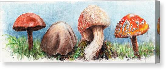 Fungus Panorama Canvas Print