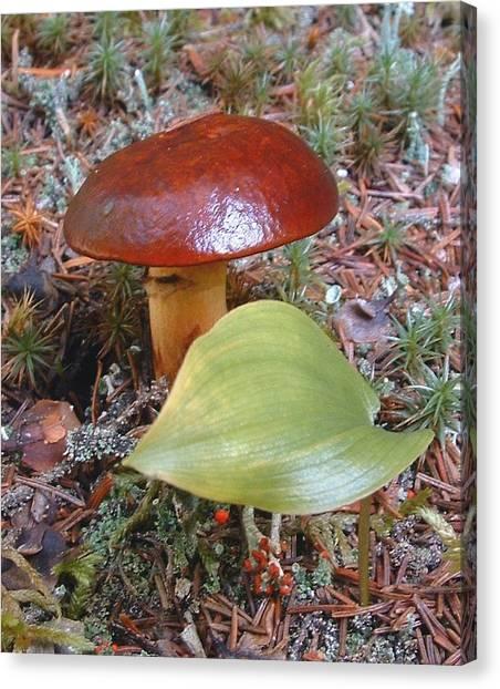 Fungus The Tapering Russula  Latin Name - Russula Saguinea Canvas Print