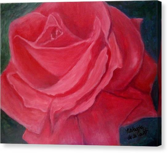 Fuschia Rose Canvas Print