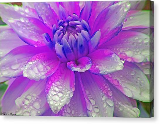 Fusia Flower Canvas Print