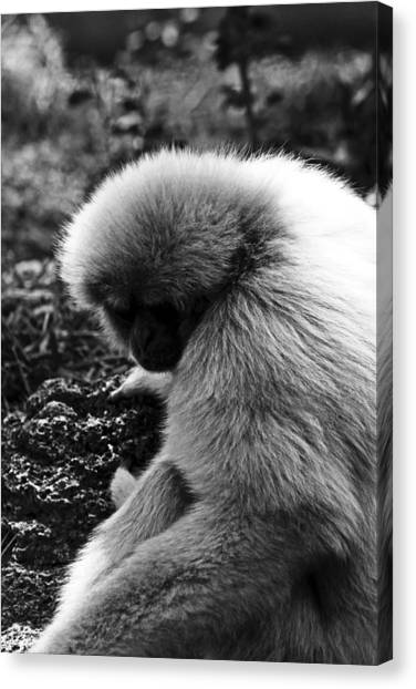 Fuzzy Monkey Canvas Print