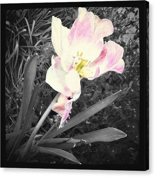 Berries Canvas Print - #fx_birthdaybash Entry, spot by Christine Cherry