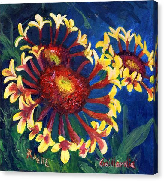 Gallardia Canvas Print by Raette Meredith