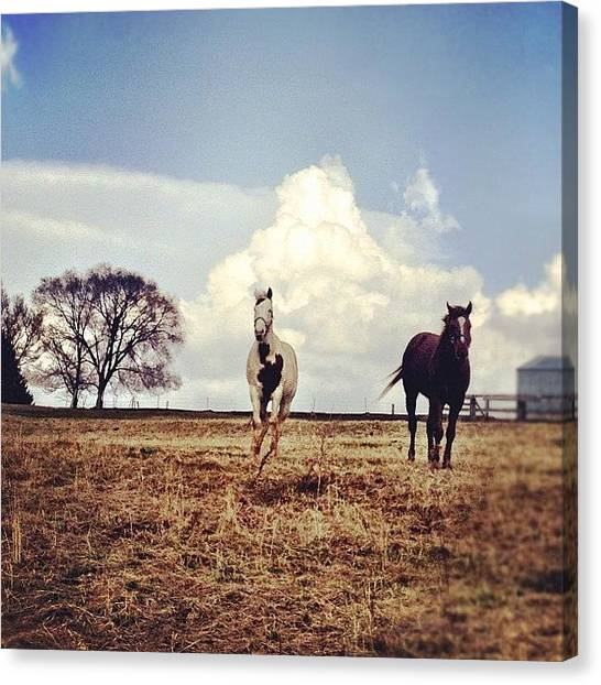 Horse Farms Canvas Print - Gallop To Rescue | #viroqua #driftless by Tony Macasaet