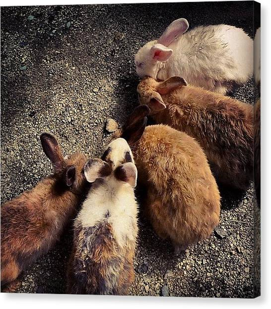 Rabbits Canvas Print - Game Plan by Kokky Lawrence