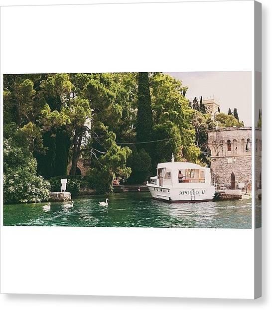 Swans Canvas Print - Garda Lake by Ann K