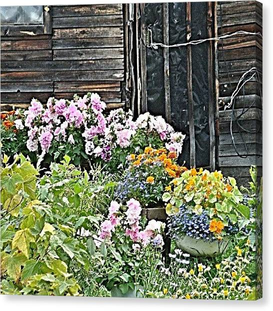 Russia Canvas Print - Garden In The Village by Igor Che 💎