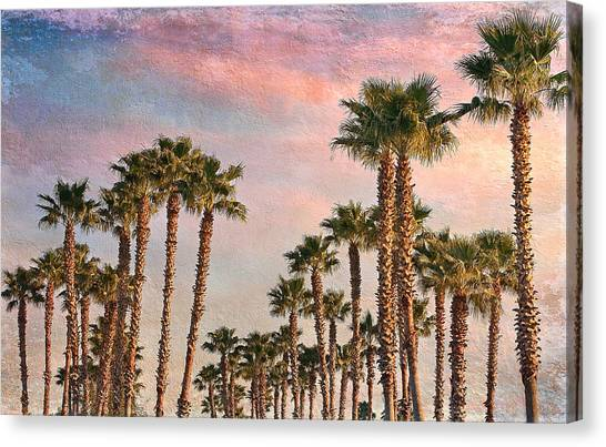 Garden Of Palms Canvas Print by Stephen Warren