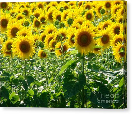 Garden Of Sunshine Canvas Print