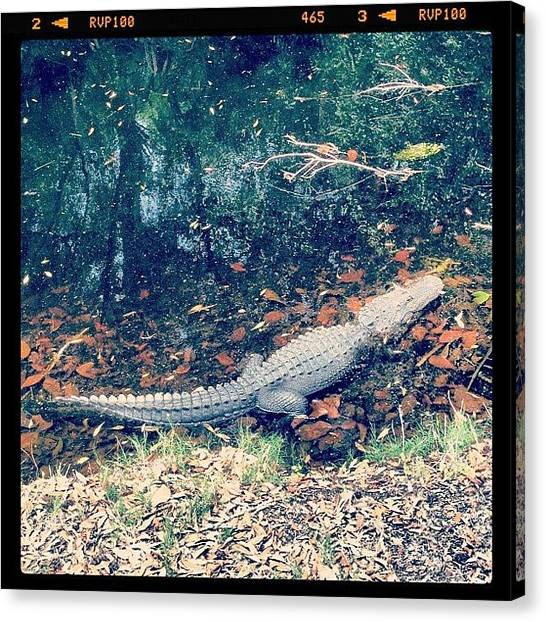 Reptiles Canvas Print - Gator Ate My Golf Ball #golf #gator by The Fun Enthusiast