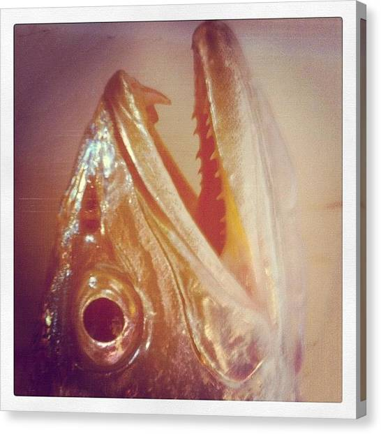 Trout Canvas Print - #gator #trout #fish #teeth #fangs #eye by Michael Hughes