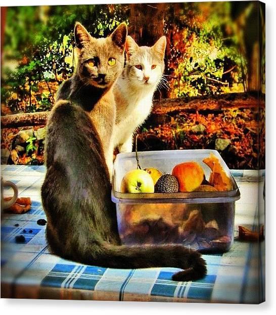 Fruit Trees Canvas Print - #gatos En El Patio, #otoño -- (#cats by José Manosalva