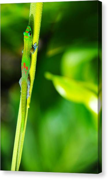 Gecko On A Stick Canvas Print